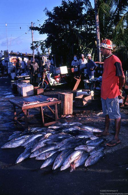 Negambo fishing harbour